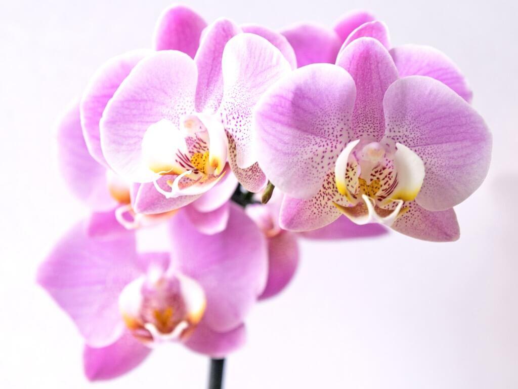 plantas para la sala de meditación